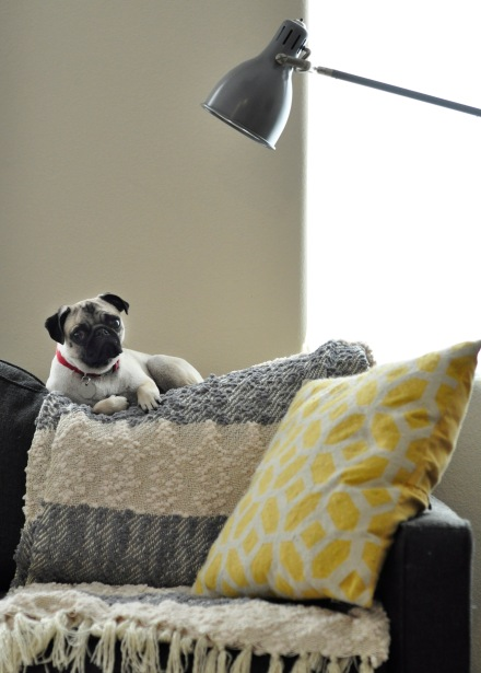pug sitting on top of couch cushions